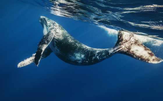 кит, whale, ocean