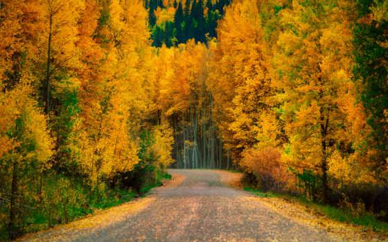 les, дорога, osen, деревя, priroda, осенний, рисунки, просмотра, ov,