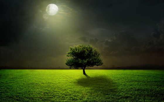 дерево, природа, свет, луна, трава, ночь, под, зелёный,