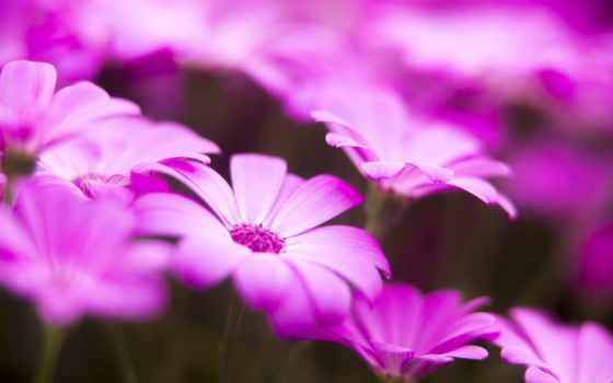 flowers, луг, поле, desktop, petals, природа,