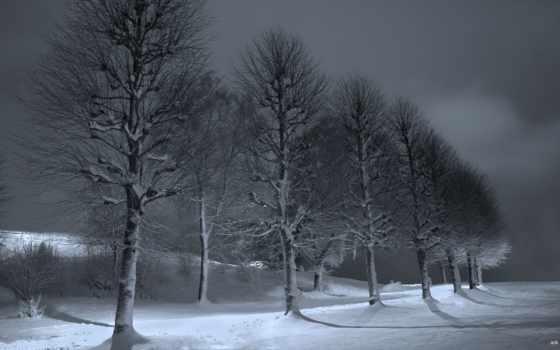 tapety, trees, miesiąc, oznaczony, категории, winter, słońca,