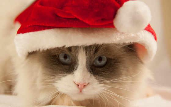 кот, zhivotnye, loading, год, телефон, оранжевые, котенок, уже,
