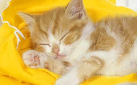 спит, котенок