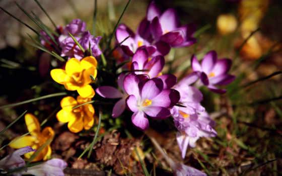 Цветы 20043