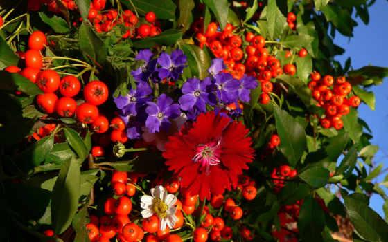 tapety, rezreshenie, kwiaty