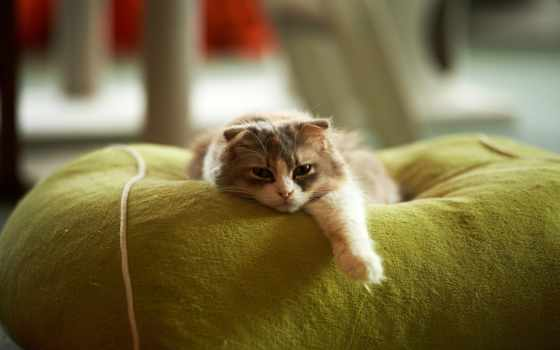 кот, лапа, котенок