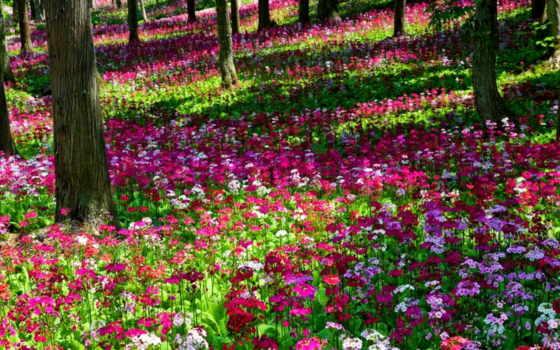 flores, hermosas, paisajes, hermosos, paisaje, las, imagenes, mas, unicowallpapers,