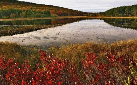 free, scenery, осень, mobile, природа, pin, acadia,