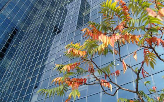 autumn, city