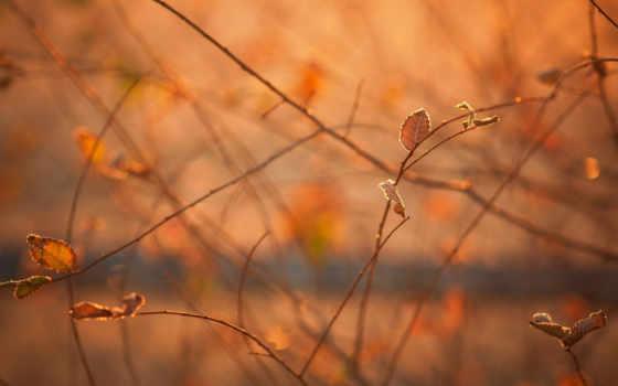 осень, макро Фон № 24070 разрешение 1680x1050