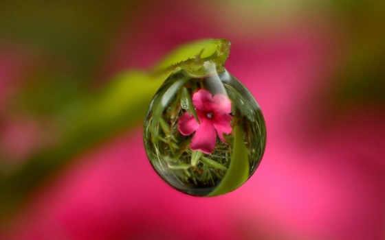 чтобы, связаться, цветок, цветы, зарегистрируйте, matsui, войдите, keiko, стебель, россия, kartinka,