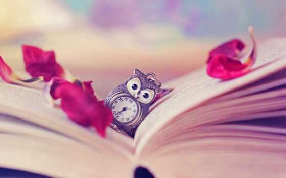 сова, watch, книга