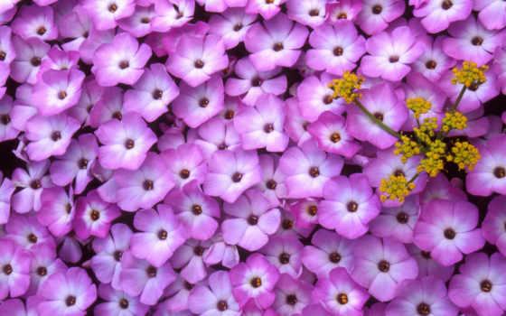 flores, papel, parede