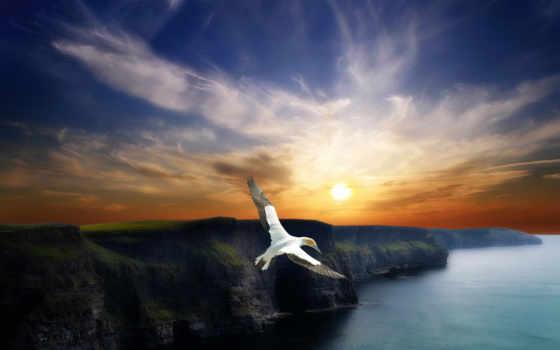 птица, полет, птицы, полете, красивые, крылья, горы, птиц,