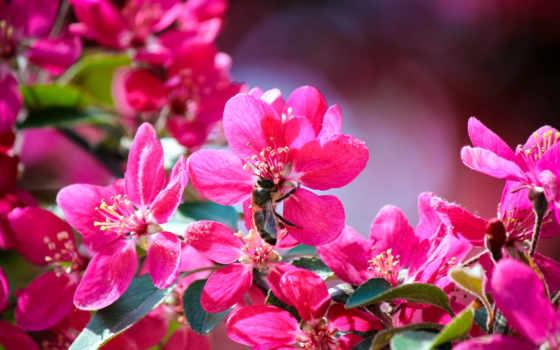 весна, розовый, flowers, цвета, макро, cvety, листва, live,