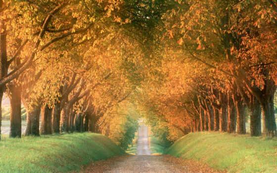 осень, mùa, олея