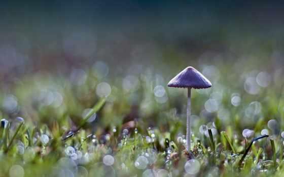 гриб, трава