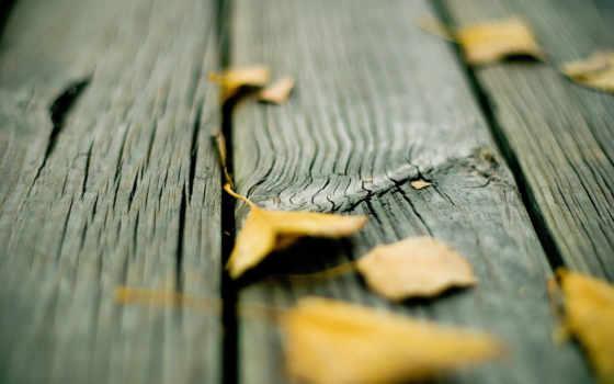 листья, полу, деревянном, доски, осень, смотрите, изображения, вернуться,