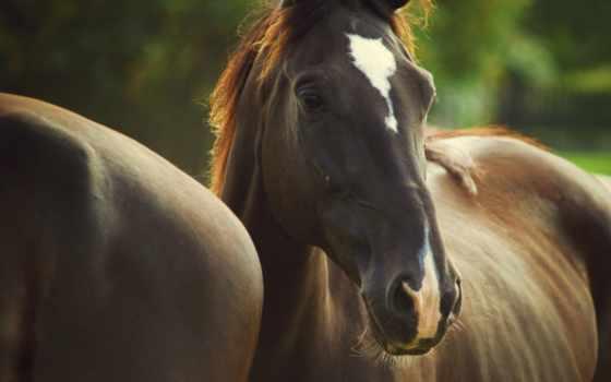 лошади, color, грива