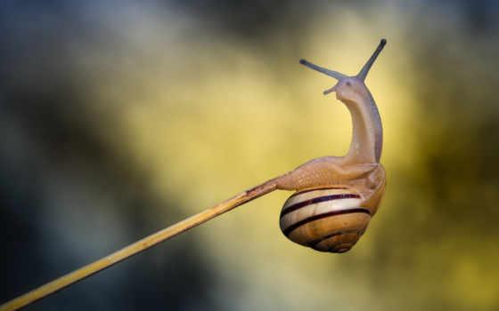 snail, улитки, красивая, маленькая, макро,