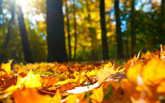 осень, trees, листва, лес,