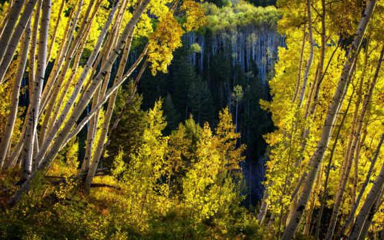 природа, landscape, изображение, лес, леса, naturaleza, дороги, del, kunst,