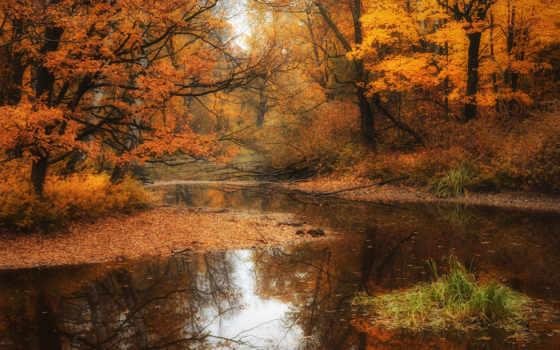 осень, park, высоком, trees, качестве, лес, осени, базе,