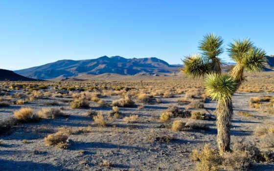 пустыня, дерево, навин, park, mojave, national, california