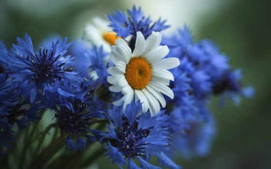 цветы, красивые, пейзажи -