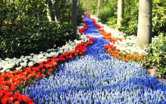 цветы, тюльпаны, sun