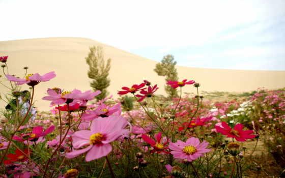 цветы, summer, марта