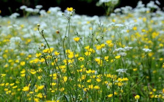 природа, весна, травы