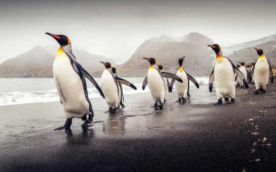 самые, красивые, янв, животных, фотографий, снимки, только, подборке, птицы,