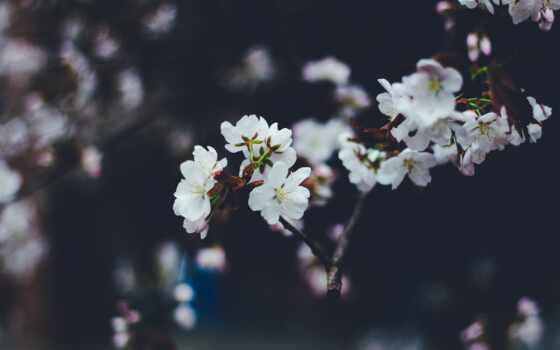 весна, цветы, bloom, branch, vesna, размытость, ноутбук, устройство, телефон, компьютер, mobile