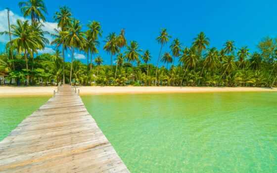 palm, babassu, attalea, speciosa, leaf, небо, дерево, summer, пляж, волна, море