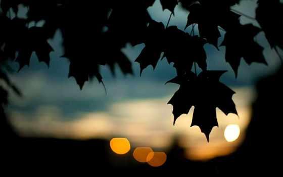 листья, темно
