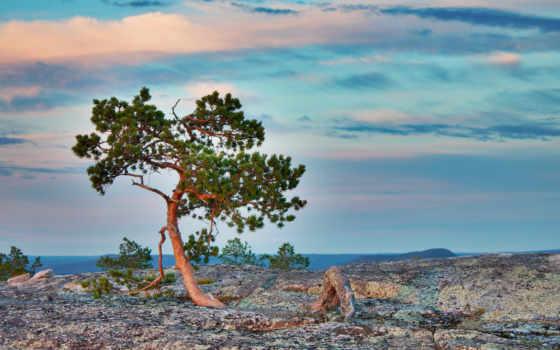 дерево, природа, landscape
