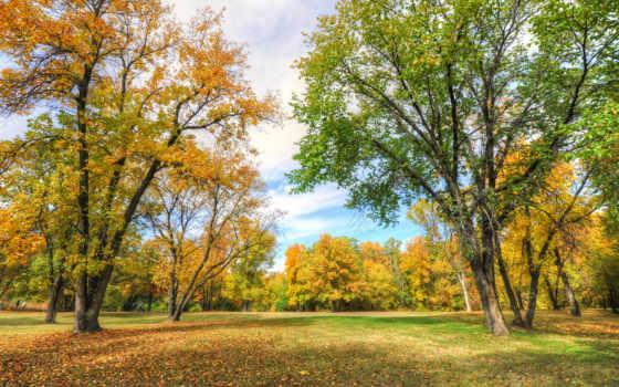 park, деревя, landscape