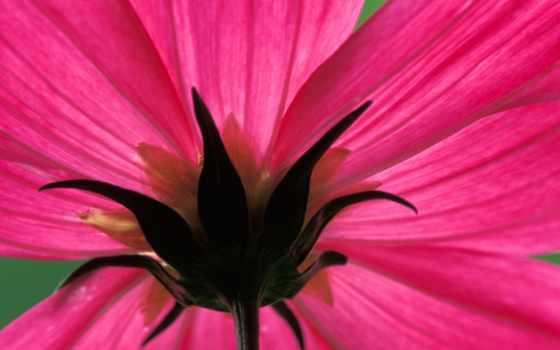 цветы, free, results