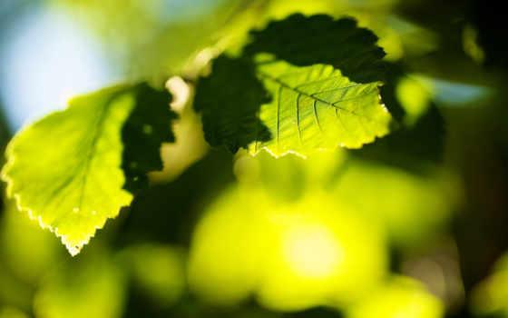 листва, природа, rays, солнца, meu, jardim, зелёный, трава, размытие,