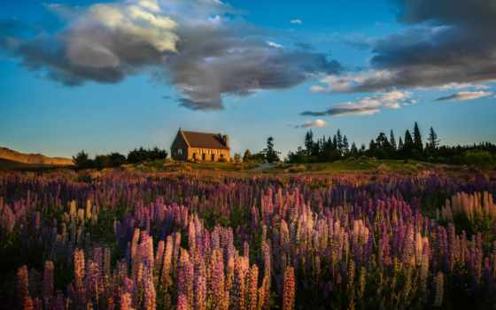 tekapo, озеро, острове, озера, люпины, цветущие, вторым, новозеландское, possible, является, южном,