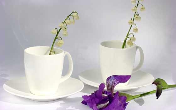 цветы, putih, bunga
