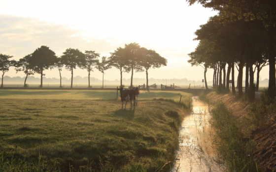 природа, cows, desktop, mist, туман, animals, весна, поле,