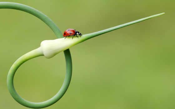 природа, plants, animals, mix, зелёный, дождь, quinta, nomes,