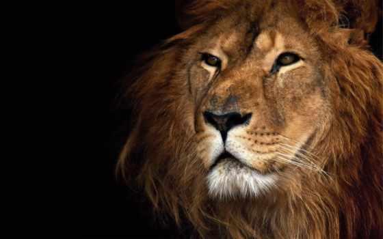 зодиака, id, подписчиков, знаков, lions, этих, россия, фотообои, знаки,