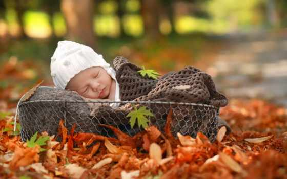 newborn, корзина, коллекция, baby, осень, природа, кот, яndex