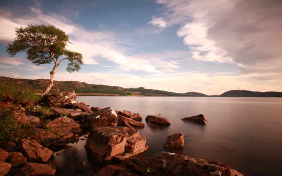 дерево, озеро