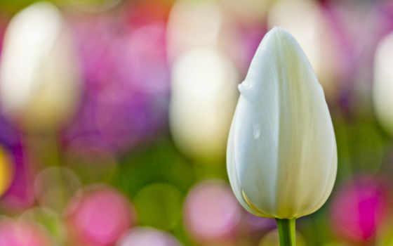 flower, белый