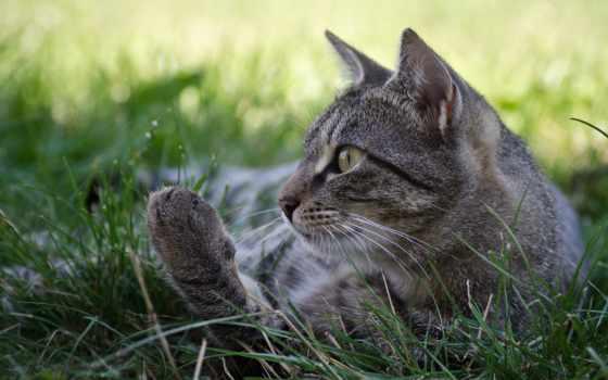 кот, has