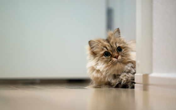 twitter, кот, header